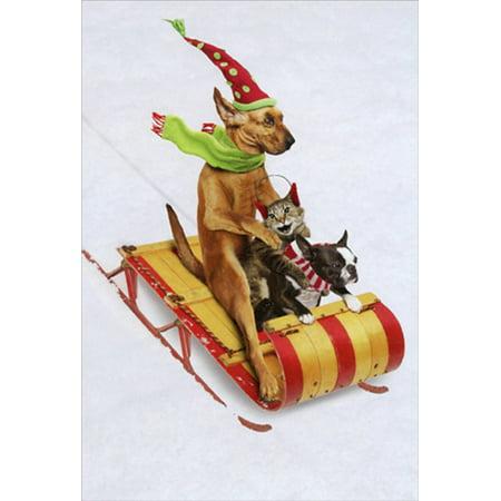 Nobleworks Animal Antics Dogs and Cat Sledding Humorous / Funny John Lund Christmas Card](Funny Animal Christmas)