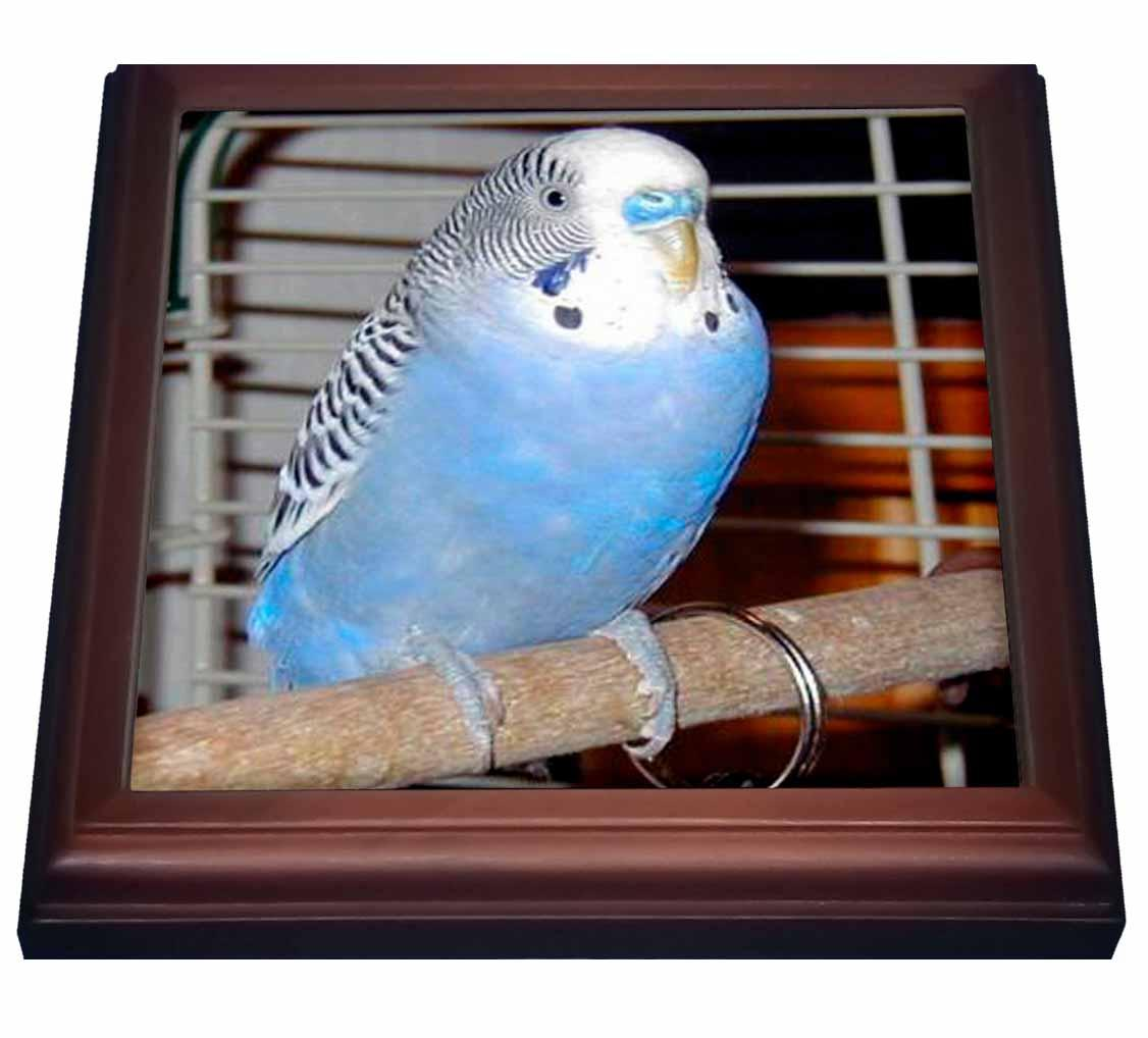 3dRose Blue Parakeet, Trivet with Ceramic Tile, 8 by 8-inch