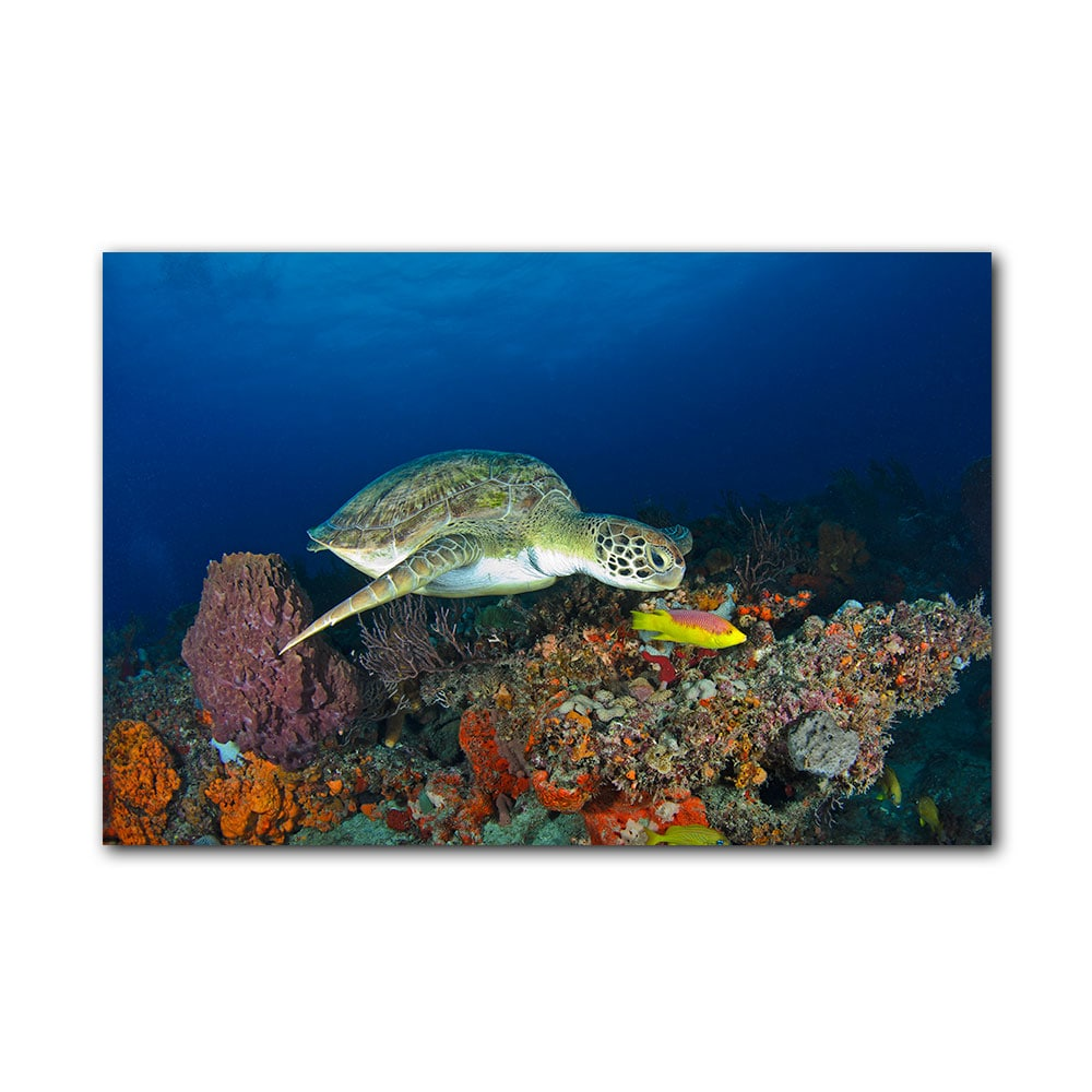Ready2HangArt Chris Doherty 'Turtle' Gallery-wrapped Canvas Wall Art