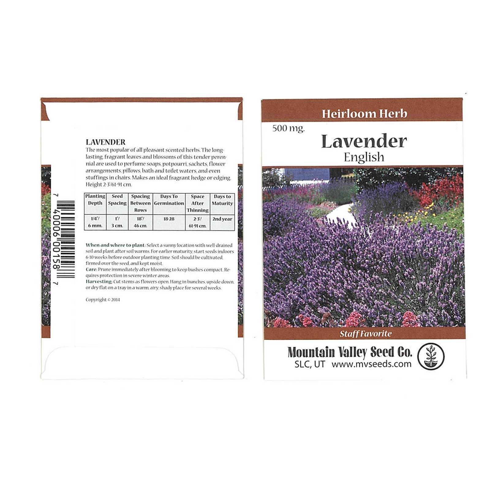 Common English Lavender Flower Garden Seeds - 500 Mg Packet - Perennial Herb Gardening Seeds - Lavandula angustifolia