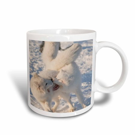 3dRose Alaska, 1002 Coastal Plain, ANWR, arctic fox - US02 SKA4937 - Steve Kazlowski, Ceramic Mug, 11-ounce