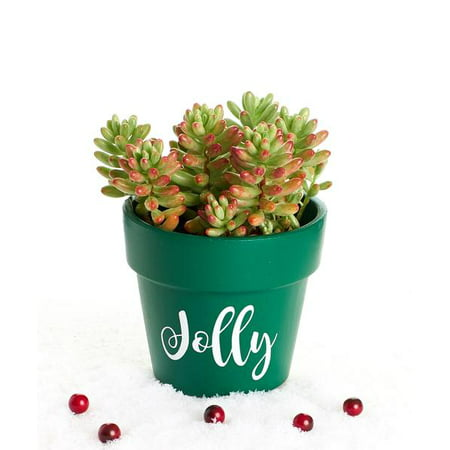 Christmas Succulent Planters.Jolly Christmas Succulent Planter In Green Terracotta 4 By Shop Succulents