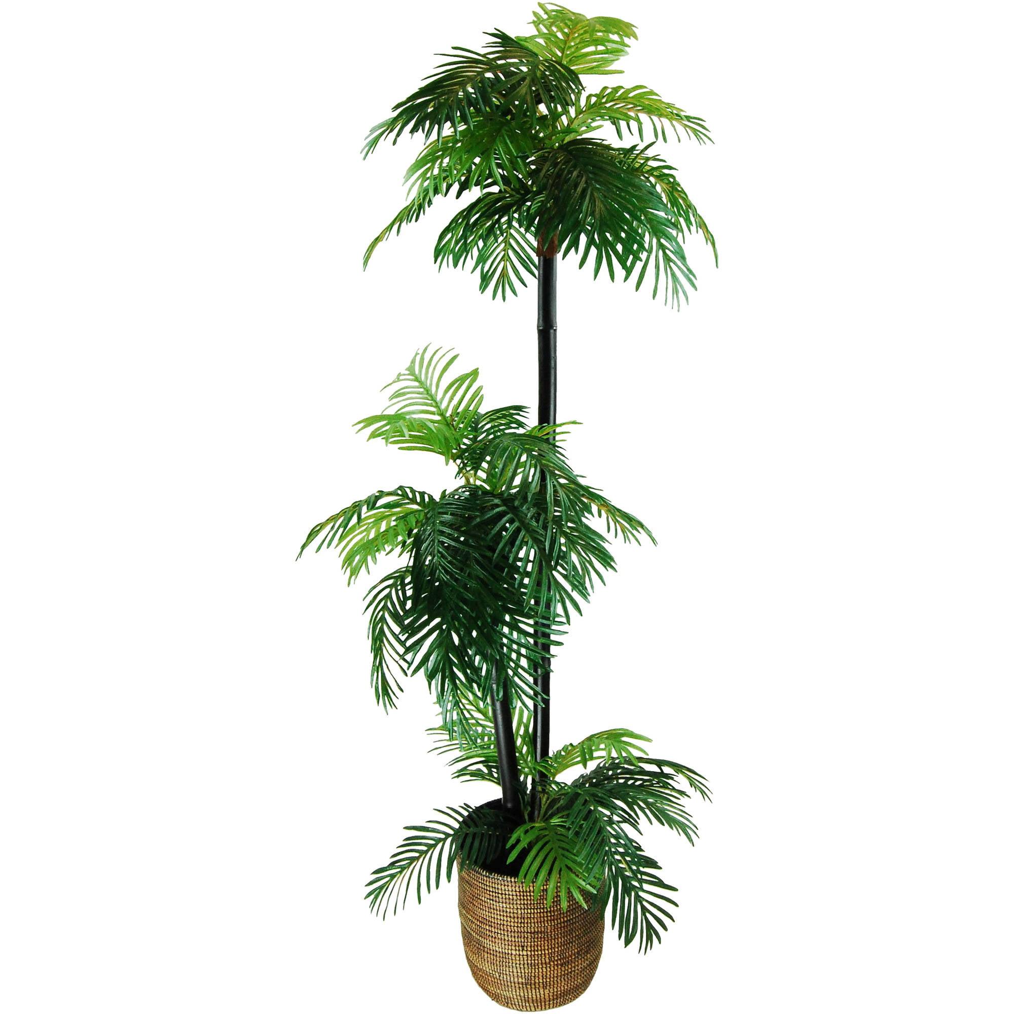 Phoenix Palm Tree in a Basket