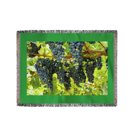Wine Grapes On Vine  2   Lantern Press Photography  60X80 Woven Chenille Yarn Blanket