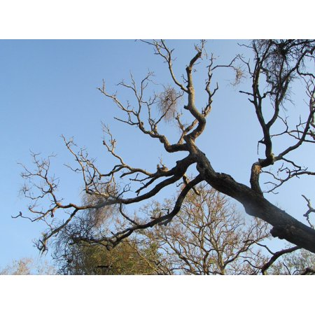 canvas print organic dharwad india agriculture twigs tree stretched canvas 10 x (Top 10 Organic Cosmetic Brands In India)