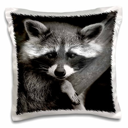 3dRose Baby Raccoon black and white digital image, Pillow Ca