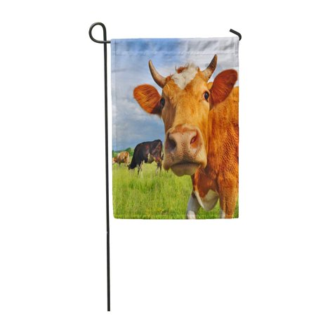 SIDONKU Livestock Head of Cow Against Pasture Grazing Beef Husbandry Garden Flag Decorative Flag House Banner 28x40 inch ()