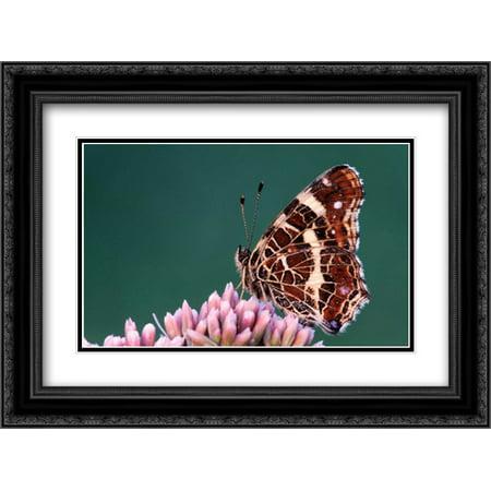 Map Butterfly On Flower  Europe 2X Matted 24X18 Black Ornate Framed Art Print By Castelijns  Cisca