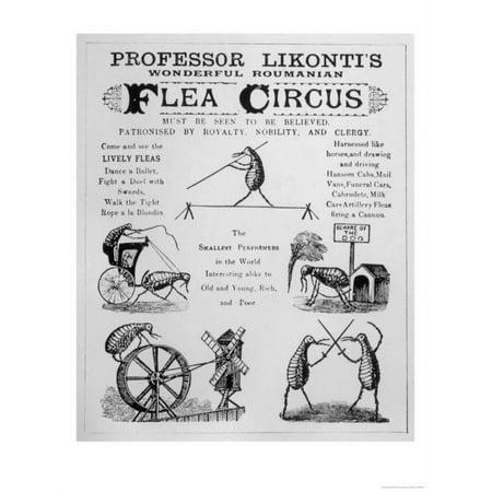 - Broadsheet Advertising Professor Likonti's Romanian Flea Circus During Visit to London Print Wall Art