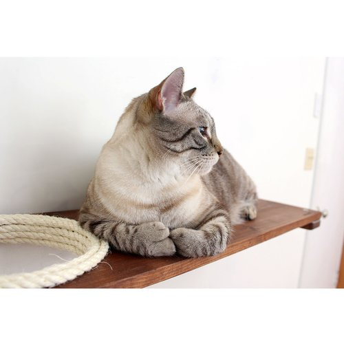 Tucker Murphy Pet 3'' Dore Mod Escape Hatch Cat Tree