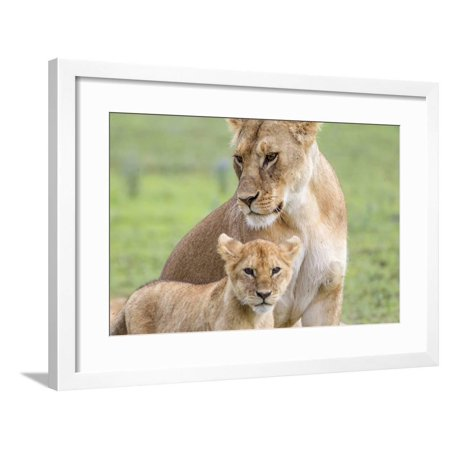 Lioness with its Cub Standing Together, Ngorongoro, Tanzania Framed Print Wall Art By James Heupel