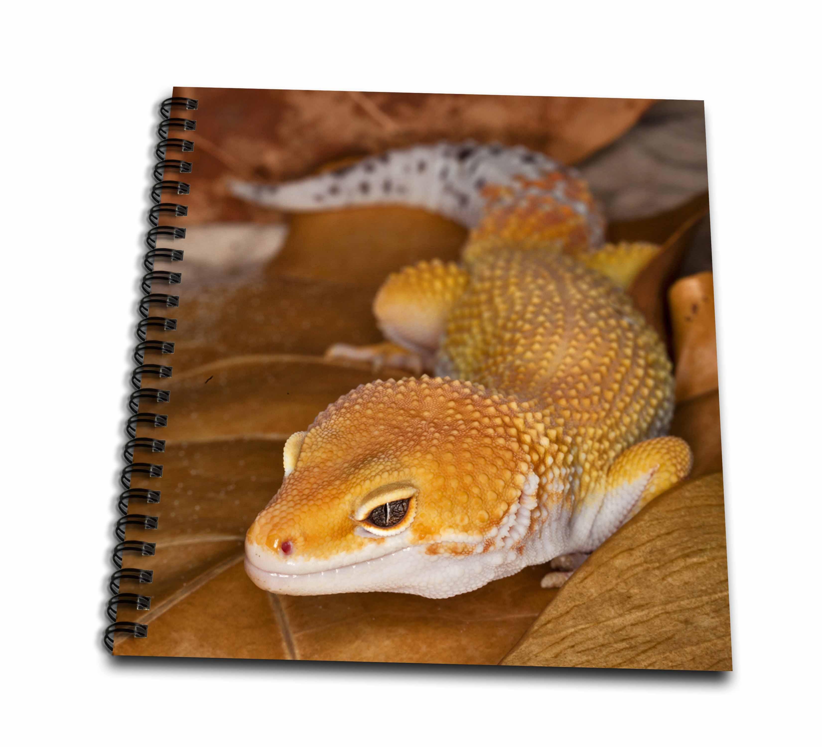 3dRose Leopard Gecko morph, Lizard, Pakistan-AS28 AJE0000 - Adam Jones - Drawing Book, 8 by 8-inch