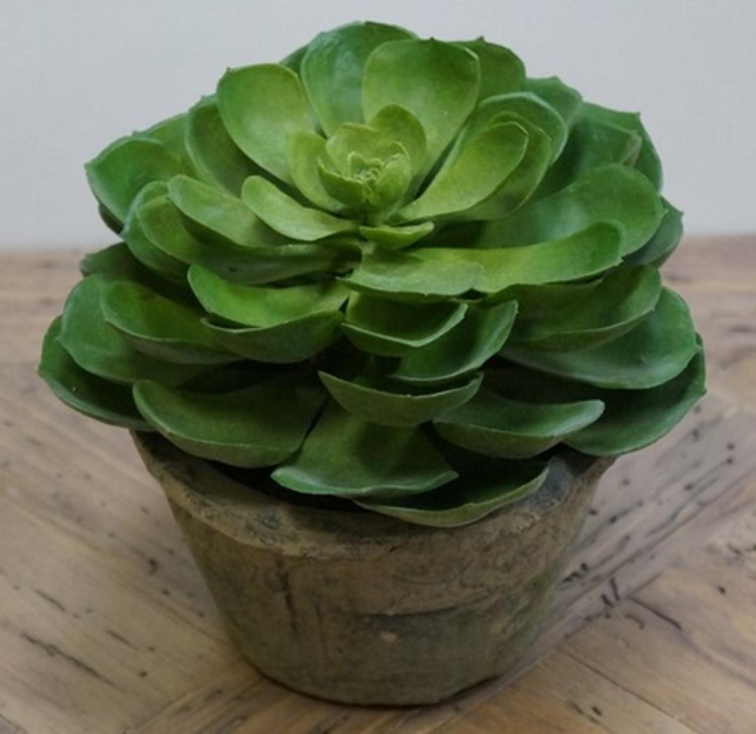"6.75"" Potted Southwestern Artificial Succulent Plant"