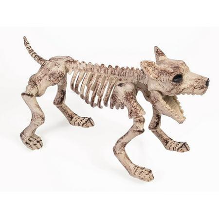 Bone Skeleton Dog Halloween Prop Décor Small - image 1 de 1