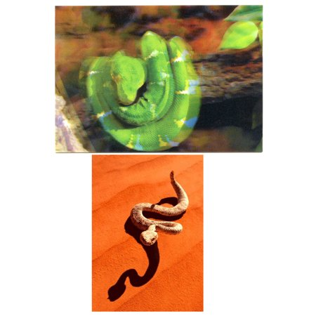 - Snakes: 2 Lenticular 3D Postcard Greeting Cards