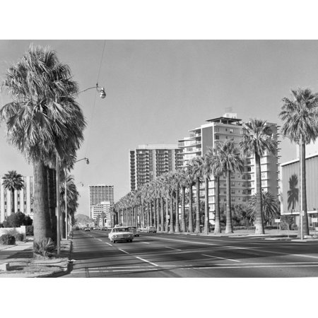 1960s Rows of Palm Trees Central Avenue Phoenix AZ Print Wall