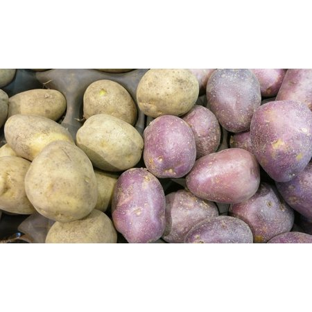 LAMINATED POSTER Russet Taters Varieties Spuds Red Potatoes Poster Print 24 x 36