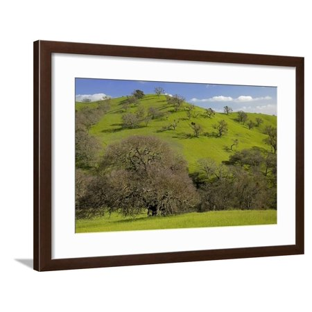 White Oak State Park Halloween (California Black Oaks, Mt Diablo State Park, California, USA Framed Print Wall Art By Charles)
