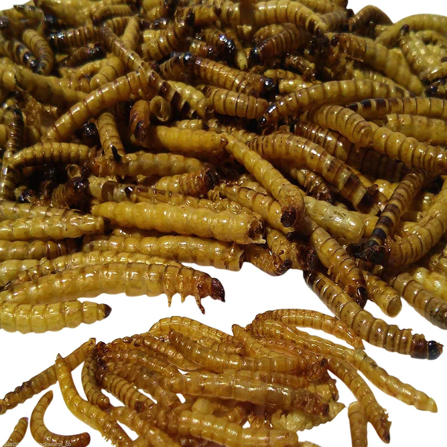 Aquatic Foods Freeze Dried GIANT Mealworms, Ideal for Large Fish, Turtles, Pond Fish, Birds, Hamsters &... by Aquatic Foods Inc.