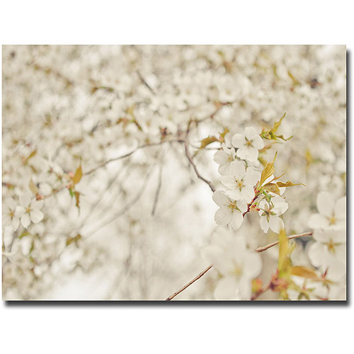 "Trademark Fine Art ""White Blossoms"" Canvas Wall Art by Ariane Moshayedi"