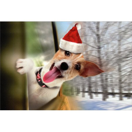 Nobleworks Jack Russell Terrier in Car Window Cute Dog Christmas Card