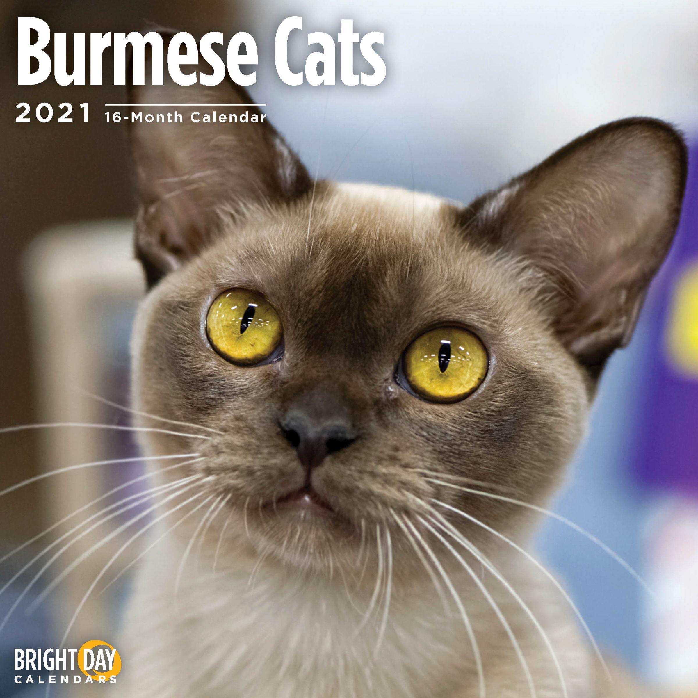 2021 Burmese Cats Wall Calendar - Walmart.com - Walmart.com