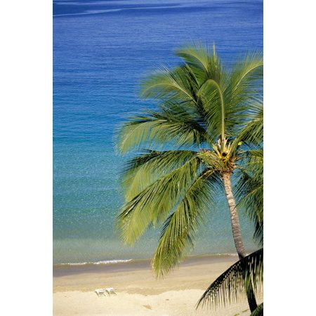 Tropical Beach With Palm Foreground Chair Distance Canvas Art Dana Edmunds Design Pics