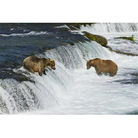 Posterazzi DPI12300642 Brown Bears Ursus Arctos Fishing for Sockeye Salmon At Brooks Falls Brooks Poster Print by Gary Schultz, 17 x 11 - image 1 of 1