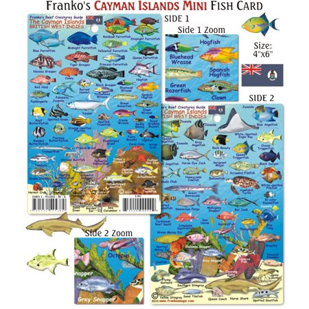 Franko Maps Mini Cayman Islands Reef Creatures Fish ID for Scuba Divers and Snorkelers