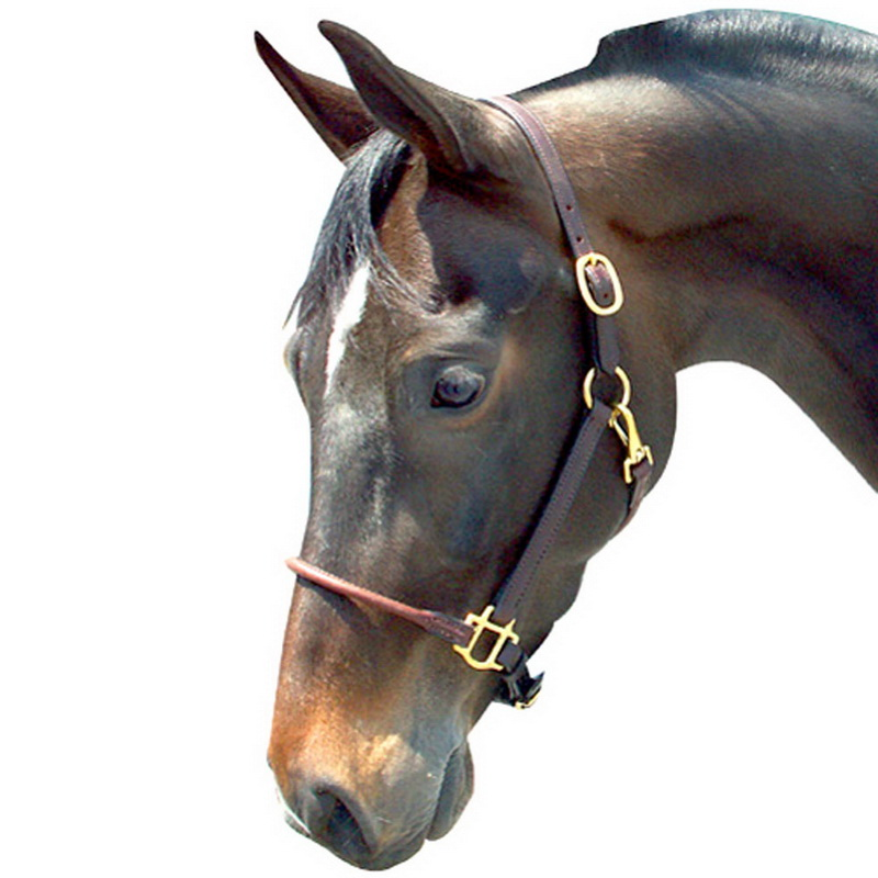 Intrepid International Leather Arabian Halter