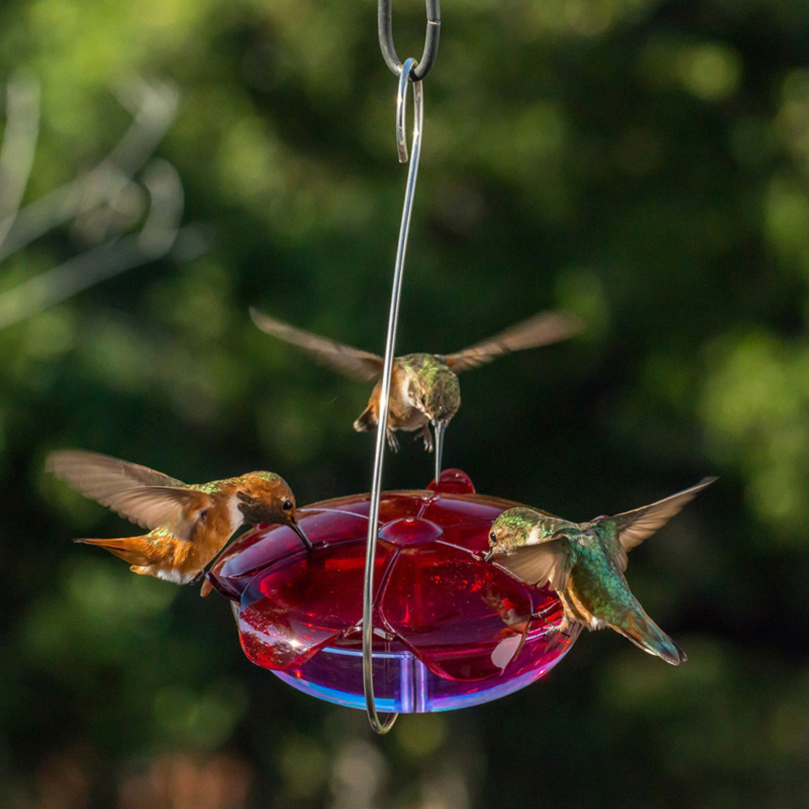 Droll Yankees Lavender Ruby Sipper Hummingbird Feeder