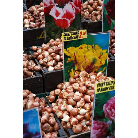 Framed Art For Your Wall Dutch Bulbs Amsterdam Bulb Group Brown Flower 10x13 Frame