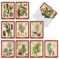 M10011XB PINING FOR CHRISTMAS' 10 Assorted All Occasions Cards Showcasing Vintage Pine Cone Classification Images For The Holiday Season with Envelopes by The Best Card Company
