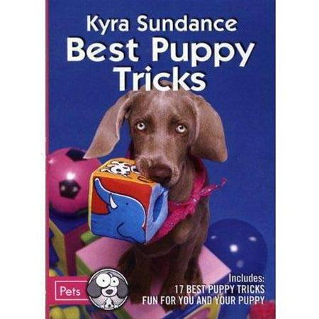 Best Puppy Tricks