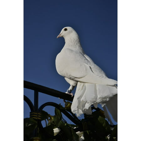 Canvas Print Love Animal White Feather Bird Dove Stretched Canvas 10 x 14