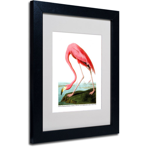 "Trademark Fine Art ""American Flamingo"" Canvas Art by John James Audubon, Black Frame"