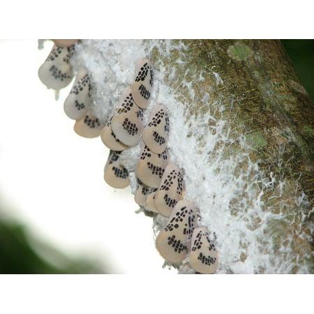 LAMINATED POSTER Insects Butterflies Silk Poster Print 24 x 36 - Silk Butterflies