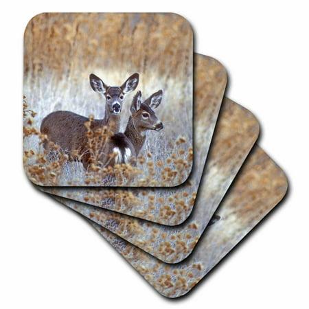 3dRose California, mule deer wildlife - US05 BJA0206 - Jaynes Gallery, Soft Coasters, set of 8 Gallery Wine Coaster
