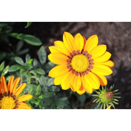 Nature Plant Plants Beauty Bloom Yellow Flower Poster Print 24 x 36