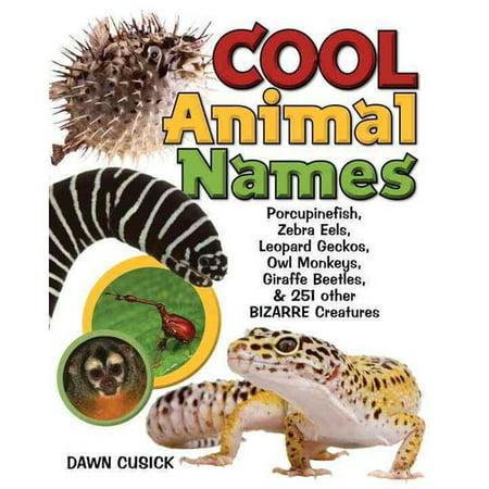 Cool Animal Names: Porcupine Fish, Zebra Eels, Leopard Geckos, Owl Monkeys, Giraffe Beetles, & 251 Other Bizarre Creatures