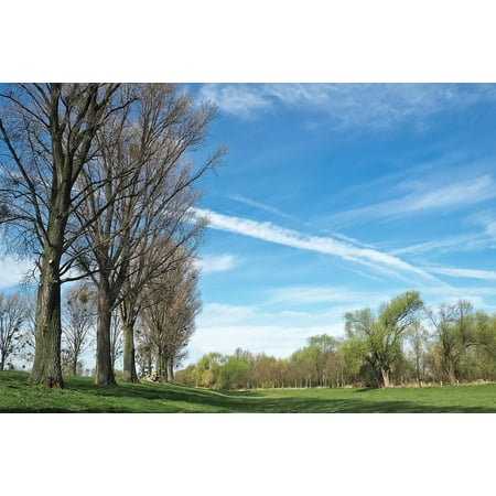 LAMINATED POSTER Blue Bare Branches Trees Meadowlands Landscape Poster Print 24 x -