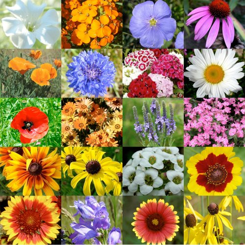 Packet of 3,000 Seeds, Dryland Wildflower Mixture (20 Species) Open Pollinated Seeds By Seed Needs