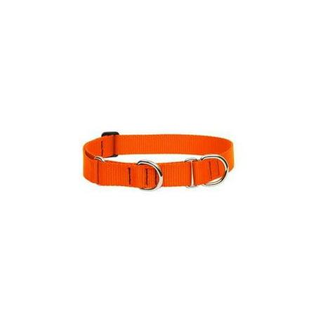 Lupine 52556 1 inch Blaze Orange 19 inch - 27 inch Designer Combo Dog Collar