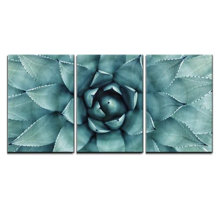 Amare Wall - wall26 - 3 Piece Canvas Wall Art - Sharp Pointed Agave Plant Leaves - Modern Home Decor Stretched and Framed Ready to Hang - 24