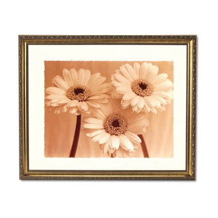 Daisies Rain B/W Photo Flower Contemporary Wall Picture Gold Framed Art (Contemporary Rail)