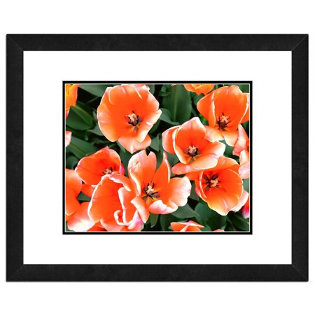 - Tulips, Flowers Framed Photo by Photo File