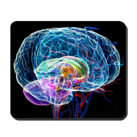 CafePress - Brain Anatomy, Artwork - Non-slip Rubber Mousepad, Gaming Mouse (Mouse Anatomy)