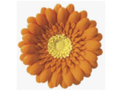 Cake Decoration Gum Paste Gerbera Daisy- Orange