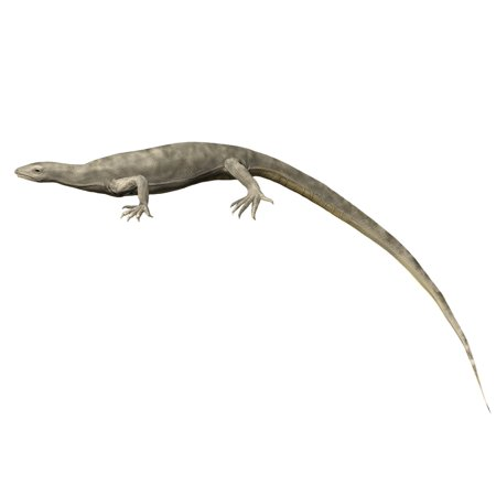 Thadeosaurus Colcanapi Late Permian Of Madagascar Poster Print
