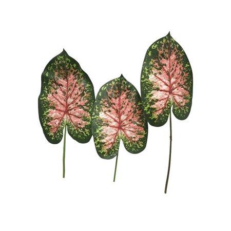 Bay Isle Home Giant Caladium Leaves Foliage (Caladium Bulb)